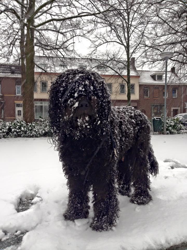 2015-01-24 Bisou sneeuw-min