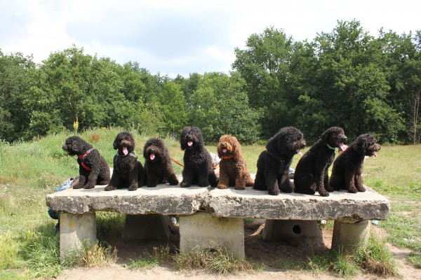 barbet hond familie foto